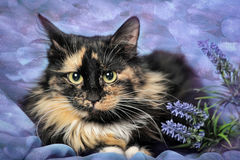 Tortie cat Stock Image