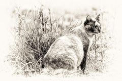 Tortie color point cat sitting and staring at something right si. One cat is sitting and staring at something right side. Black and white fine art outdoors royalty free stock image