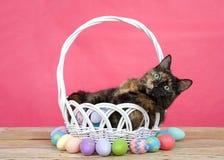 Tortie strimmig kattkatt i den easter korgen som omges av färgrika ägg Arkivfoton