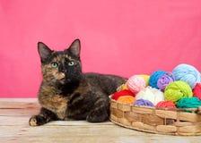 Tortie strimmig kattkatt med garnnystan som ser upp Royaltyfri Foto