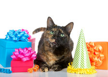 Tortie tabby cat with birthday presents on white background Royalty Free Stock Photography