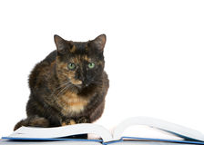 Tortie Tabby Cat crouched over a book looking at viewer Royalty Free Stock Photography