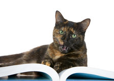 Tortie Tabby cat laying on a book, mouth open Stock Photography