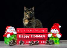 Tortie tabby cat sitting in a red box with Happy Holidays Stock Photography