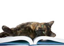 Tortie Tabby laying on a book looking at viewer Stock Photo
