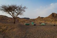 Tortilis акации, Negev Стоковое фото RF