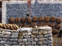 Tortini dei yak che si asciugano sulle pareti di una casa tibetana, Sakya, Tibet, Cina fotografia stock