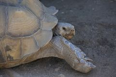 Tortious Photographie stock