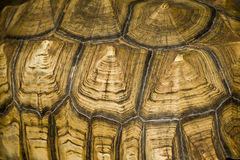 Tortise Shell Abstract Royalty Free Stock Photography