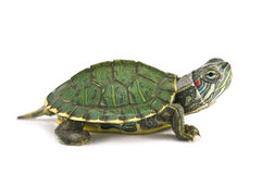 Tortoice Royalty Free Stock Photography