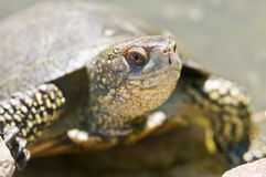 Tortoice Stock Photos