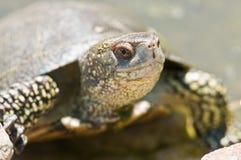 Tortoice Stock Photos