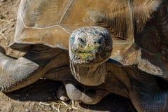 Tortoise επάνω στενό Στοκ φωτογραφία με δικαίωμα ελεύθερης χρήσης