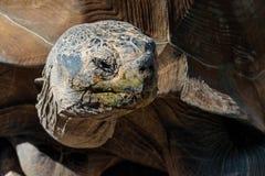 Tortoise επάνω στενό Στοκ φωτογραφίες με δικαίωμα ελεύθερης χρήσης