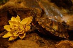Tortoise και λωτός Στοκ φωτογραφία με δικαίωμα ελεύθερης χρήσης