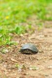 Tortoise με τα κίτρινα σημεία Στοκ Φωτογραφίες