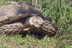 tortoise Obrazy Stock