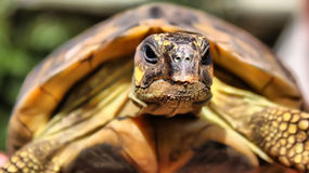 Tortoise. This is a photo of tortoise stock image