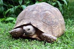 Tortoise Στοκ εικόνα με δικαίωμα ελεύθερης χρήσης
