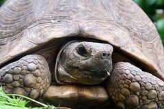 Tortoise Στοκ φωτογραφία με δικαίωμα ελεύθερης χρήσης