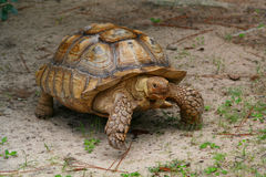 Tortoise Stock Photos
