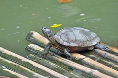 Tortoise Stock Images