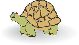 Tortoise Στοκ φωτογραφίες με δικαίωμα ελεύθερης χρήσης