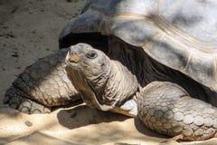 tortoise Zdjęcia Royalty Free
