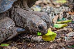 tortoise Zdjęcie Stock