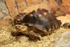 Tortoise immagine stock libera da diritti