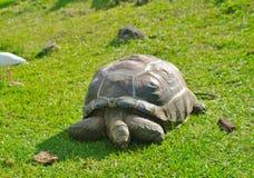 tortoise Obraz Stock