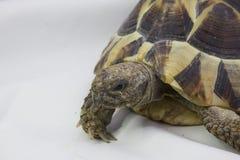 tortoise Zdjęcia Stock