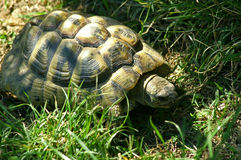 Tortoise Stock Images