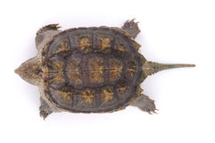 Tortoise. A tortoise on white background Stock Photos