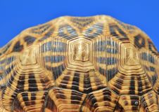 Tortoise - Animal Patterns and Backgrounds. Leopard-skinned tortoise - photo taken on a game ranch in Namibia, Africa stock image