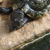Tortoise. Animal pet cool natural nature Royalty Free Stock Photo