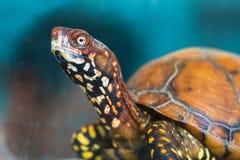 Tortoise_AP Стоковые Фото