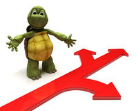 Tortoise with arrows Stock Photo