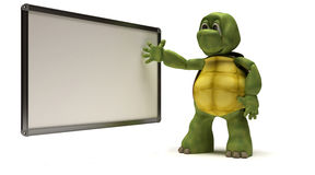 Tortoise with blank white board Royalty Free Stock Photography