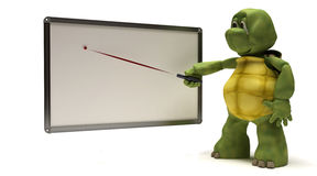 Tortoise with blank white board Stock Photos