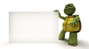 Tortoise with a blank white sign Royalty Free Stock Photos
