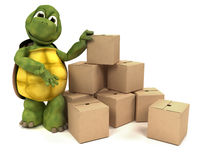 Tortoise with boxes for shipping Stock Image