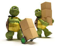 Tortoise with boxes for shipping Royalty Free Stock Images