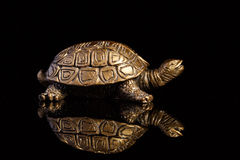 Tortoise bronze jewelry with a reflection. On a black background Royalty Free Stock Image