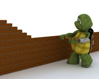 Tortoise building contractor Stock Image