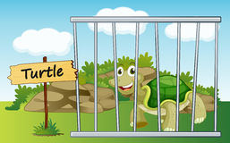 Tortoise in cage Stock Images