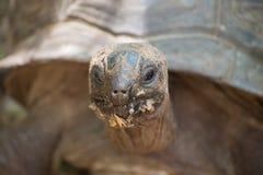 Tortoise Stock Photography