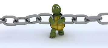 Tortoise with a chain Stock Images