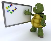 Tortoise with class room drywipe marker board Royalty Free Stock Photography