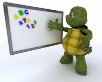 Tortoise with classroom drywipe board Royalty Free Stock Photography